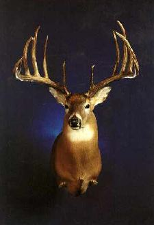 World Record Buck